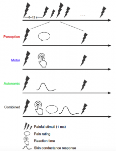 experimental set-up showing that the scientists randomized the time between laser pulses and how strong the pulses were. Perception (how it felt), motor (reaction time), and autonomic (skin conductance) responses were measured after laser pulses.